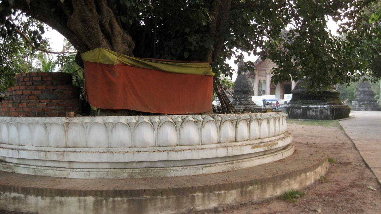 キンキラの寺院よりは、こういう樹齢を重ねた樹々の方が存在感がある。