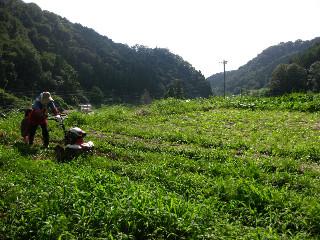 無農薬の畑なので、すぐに雑草が生えるそう。
