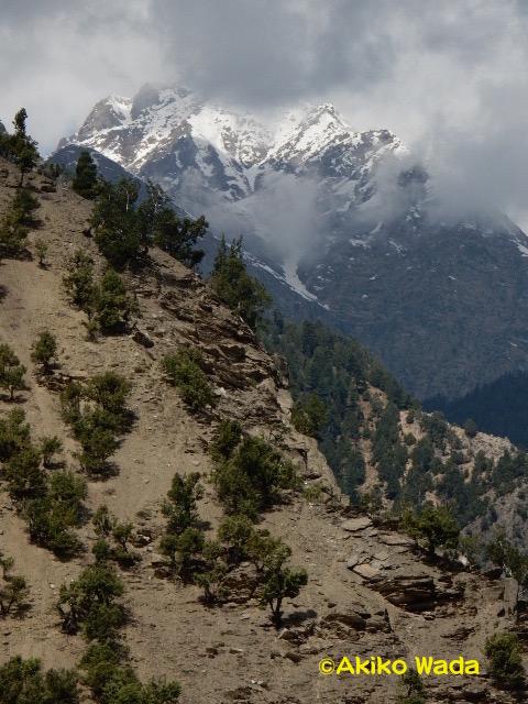 ルンブール谷から見えるバフーク山。この頂上には妖精が住む湖がある。こういった山頂の雪渓や氷河が温暖化で溶け出して、違法伐採や森林管理がおろそかになっている山地を襲って鉄砲水が起こると思われる。