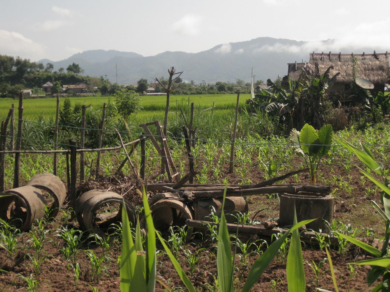 焼酎作りの村までのサイクリングでの風景。日本と似てる