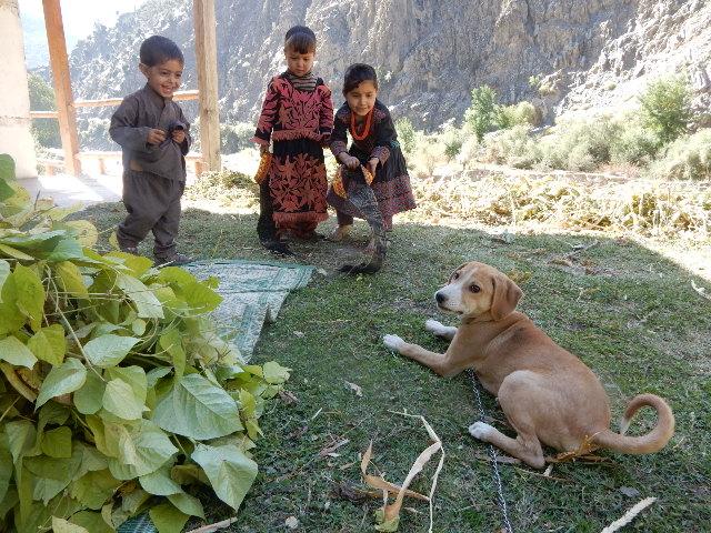 うちの犬タローはもうすぐ生後4ヶ月になるが、飛びかかるし、噛み癖は治らない。その上、村の子供達がちょっかい出したり、囃し立てるので、余計に興奮して、全くコントロールがきかない。