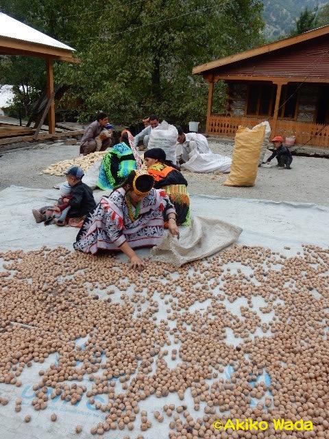 クルミの収穫もそろそろ終わり。クルミは単なる栄養源というだけでなく、浄めの儀礼や祝いの行事に多くのクルミパンが焼かれる。言わば紅白餅のような役割を果たす。