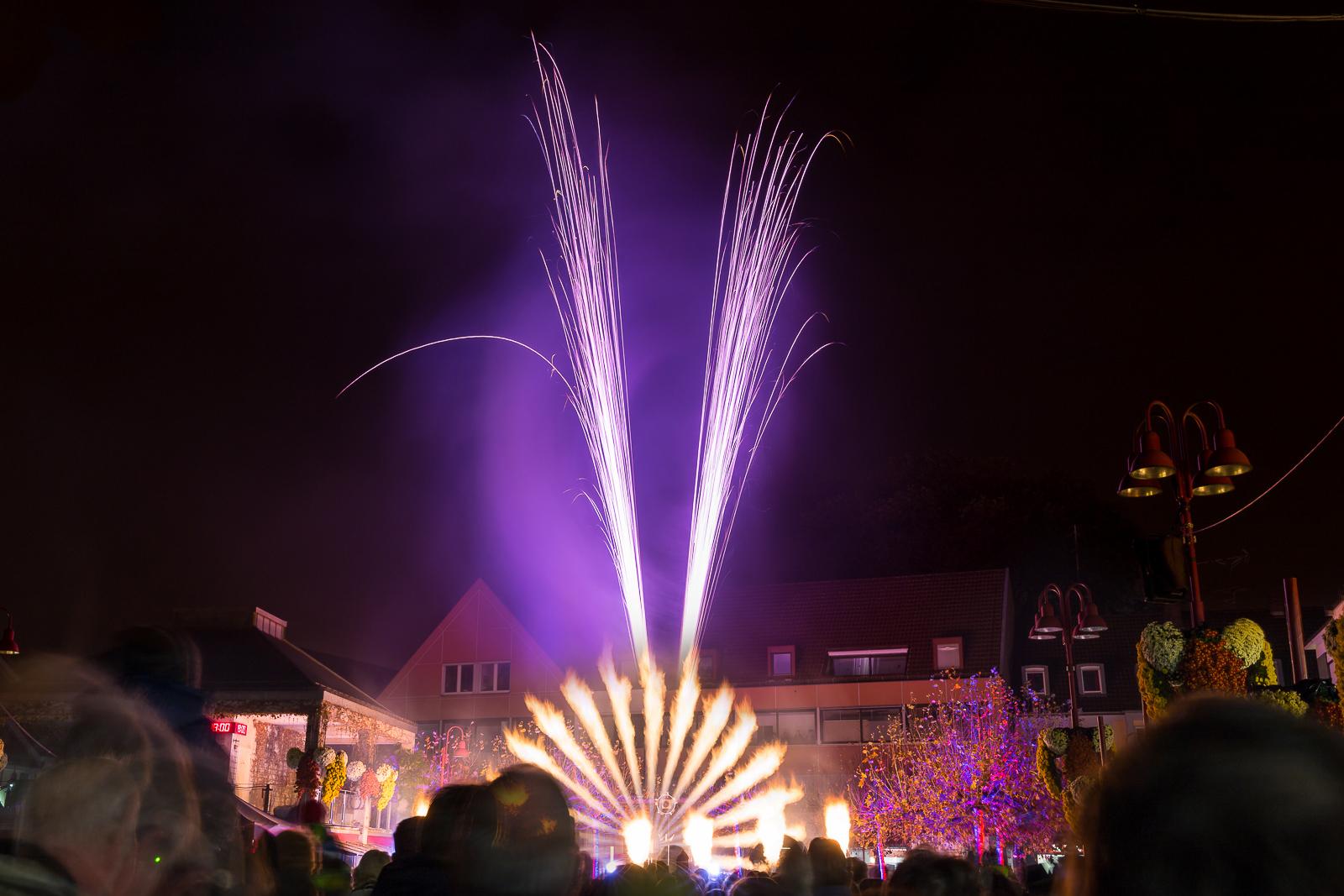 Chrysanthema in Lahr bei Freiburg