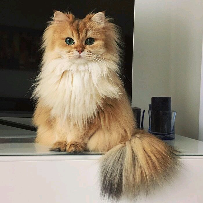 Les chats de mai
