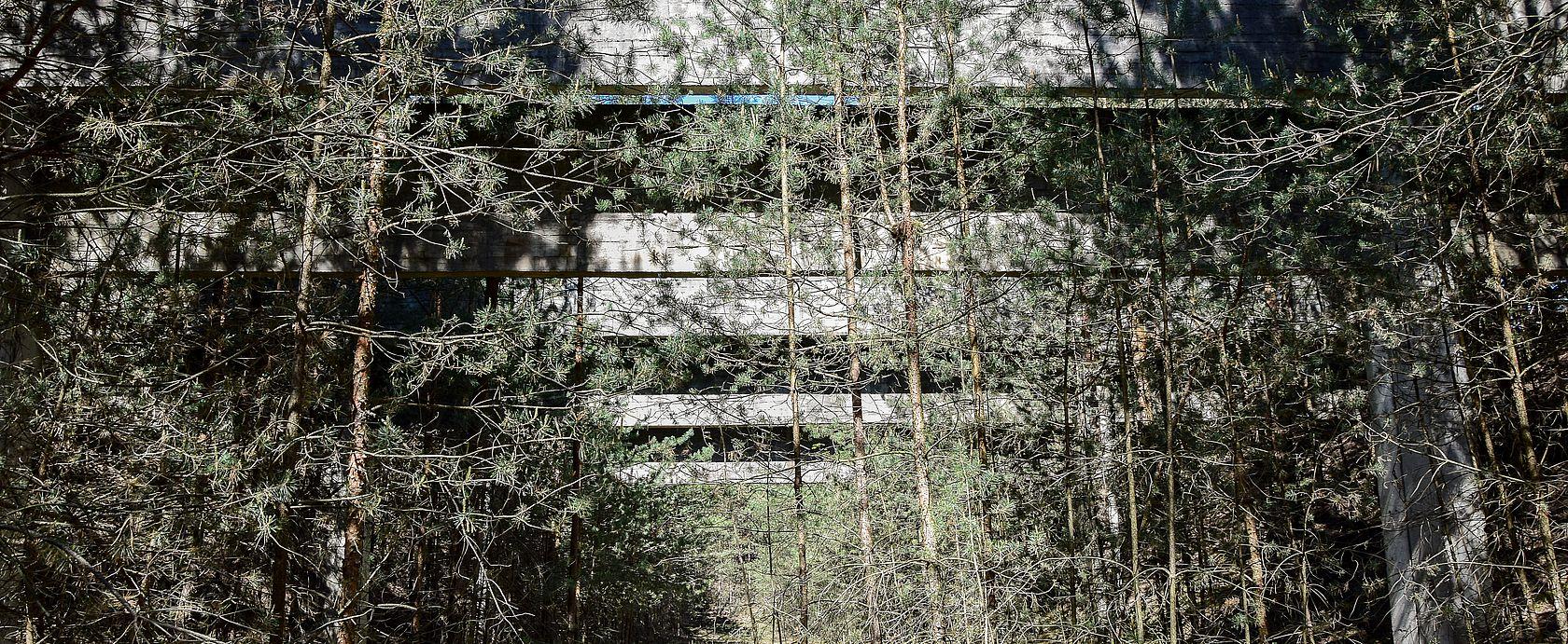 Kugelfangbrücken im Wald