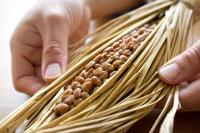 納豆は発酵食品