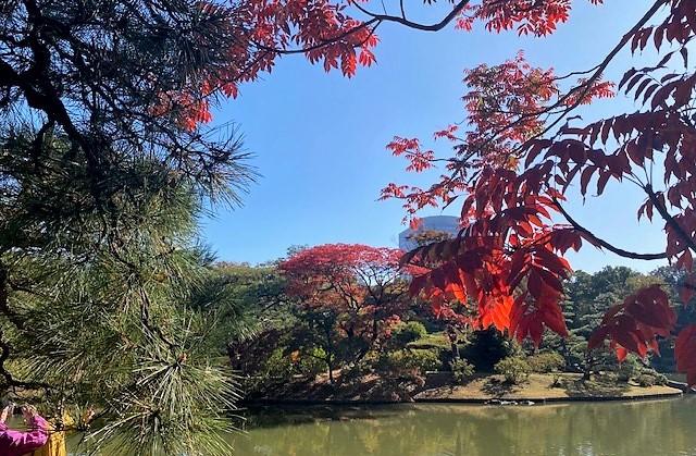 【東京名所】六義園・美しすぎる紅葉庭園【50代からの一人ゆる旅】