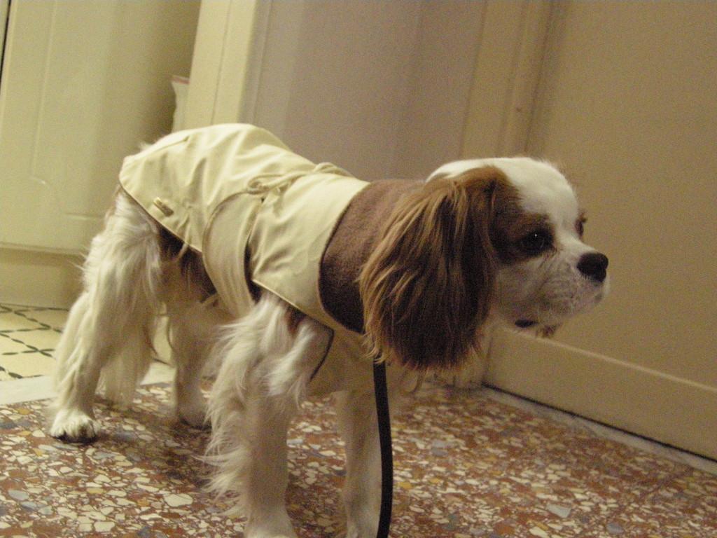 dicembre 2008...che mi tocca sopportare,detesto i cappottini!!!