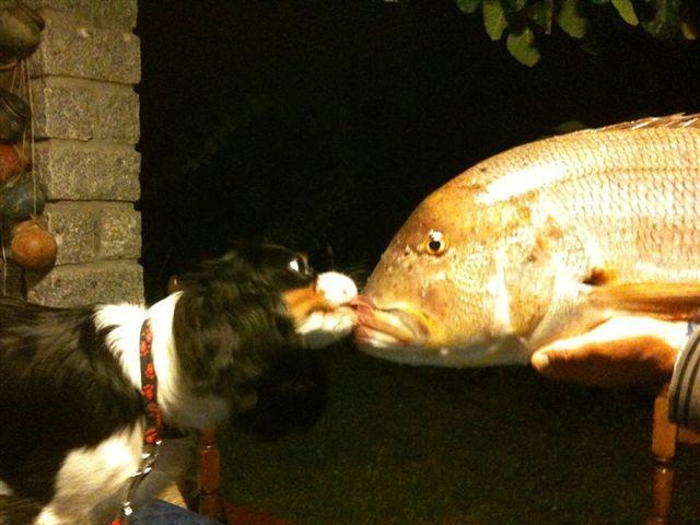 che bello leccare il pesce......un dentice di   9 kg pescato dallo zio