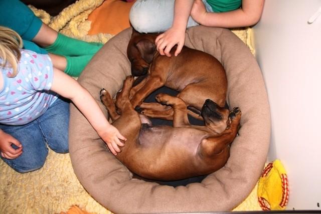 Bei sanften Steicheleinheiten lässt es sich gut einschlafen