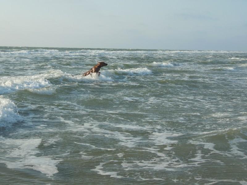Morani in der Nordsee