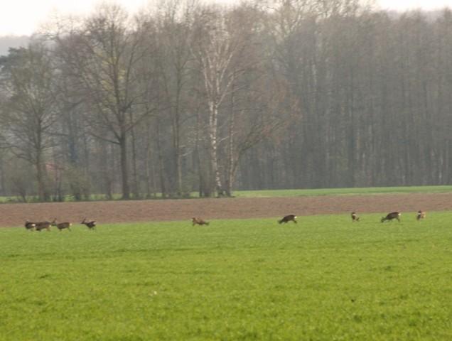 Auch in Delbrück tummelt sich das Wild