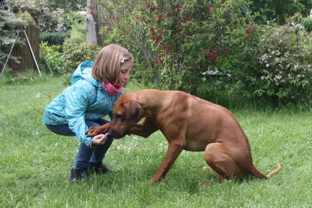 Tessa auf dem Weg zur Hundeführerin