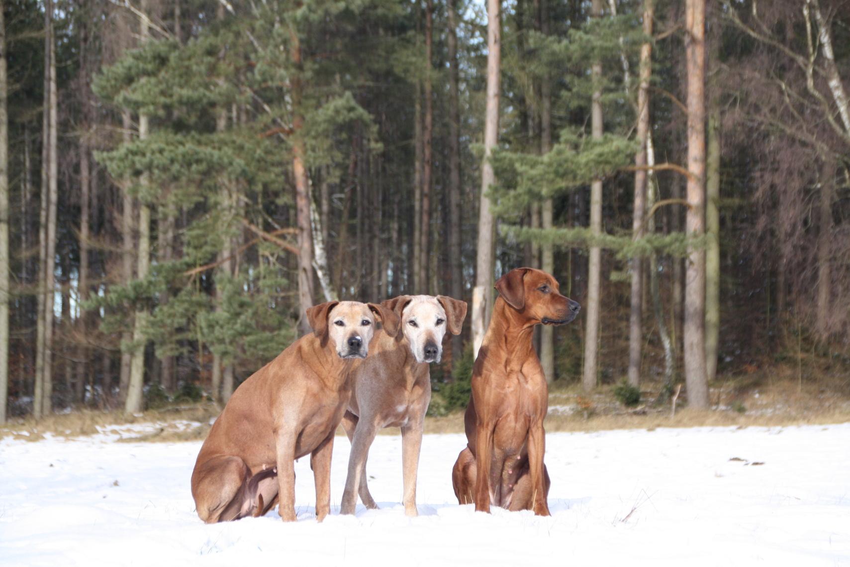 Die 3 Mädels