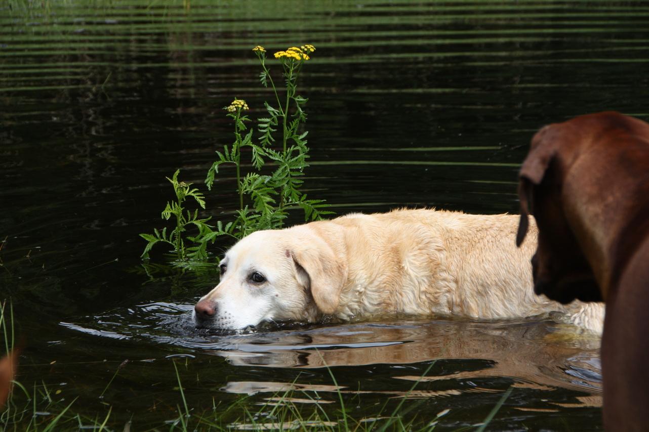 Lara liebt das Wasser
