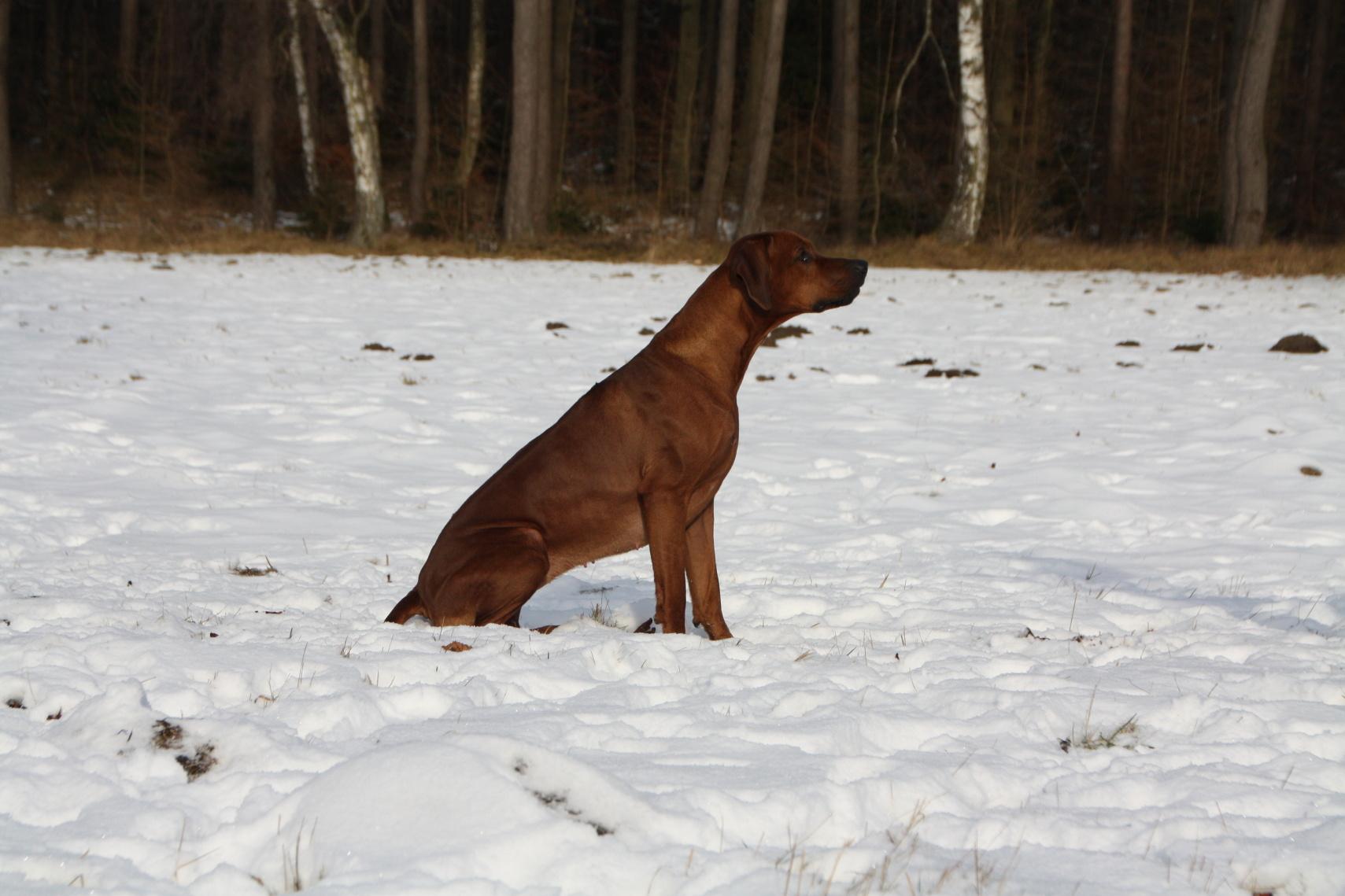 Röschen sitzt im Schnee (doch nur für das Foto)