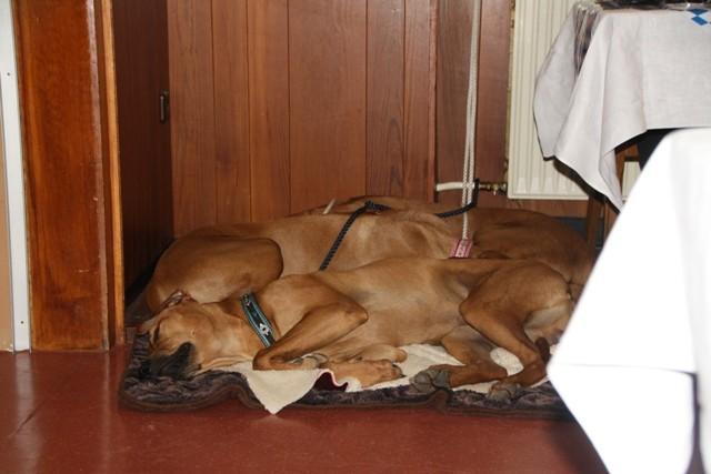 Während die Menchen angeregt zuhören, machen es sich die Hunde gemütlich