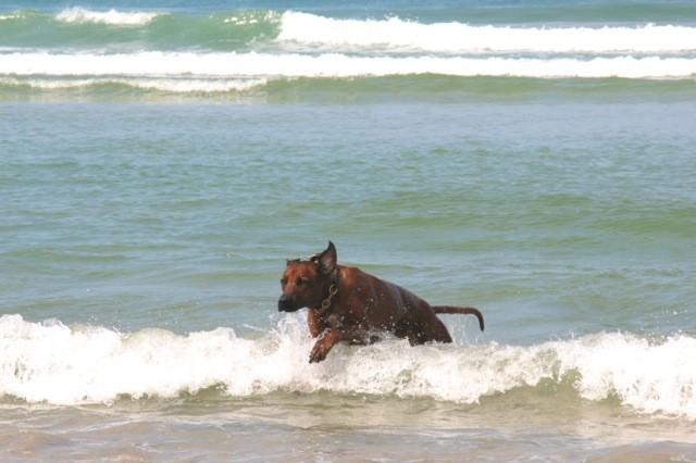 Auch Caspar liebt das Wasser