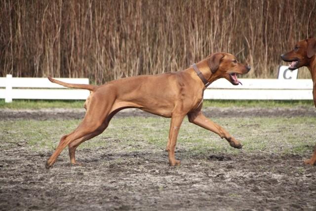 Rosalie ist mit 64 cm gleich groß wie Röschen aber deutlich kräftiger vom Körperbau