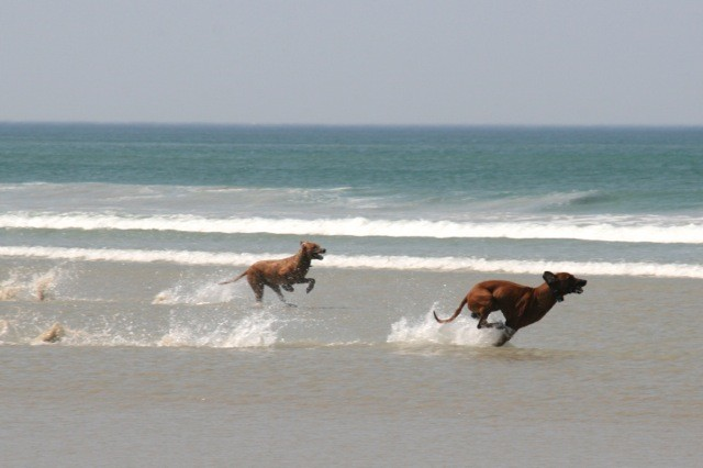 und noch mehr das Rennen mit Sand unter den Füßen