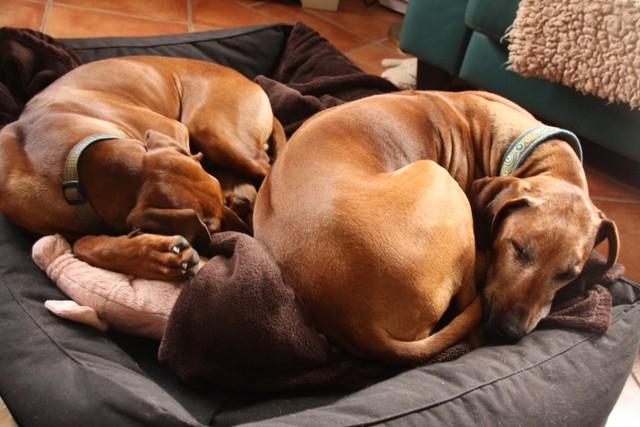 Oma macht sich klitzeklein, damit der Stöpsel auch genug Platz in ihrem Bett hat.