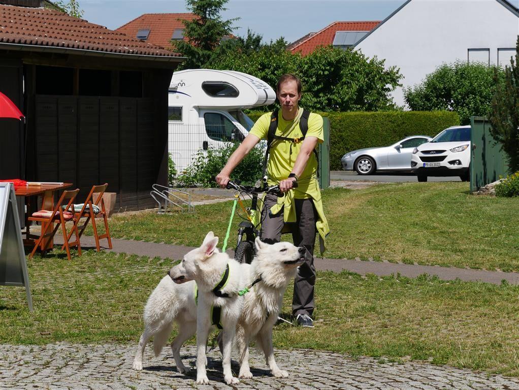 Herr Fuhlrott hat 2 seiner Zughunde angespannt