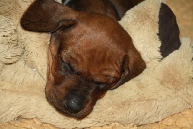 Auf unserem neuen Freundl lässt es sich auch gut schlafen