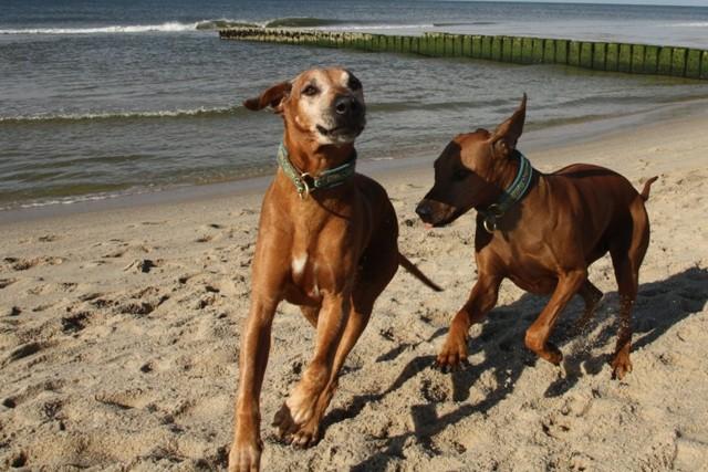 Gheila und Bi Jua im weißen Sand von Westerland