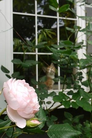 お外はいいな~またお母さんは庭仕事?