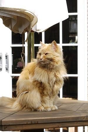 あたしゃシニア 面倒見るよ・・・とは言うもののやっと子ネコに慣れました。