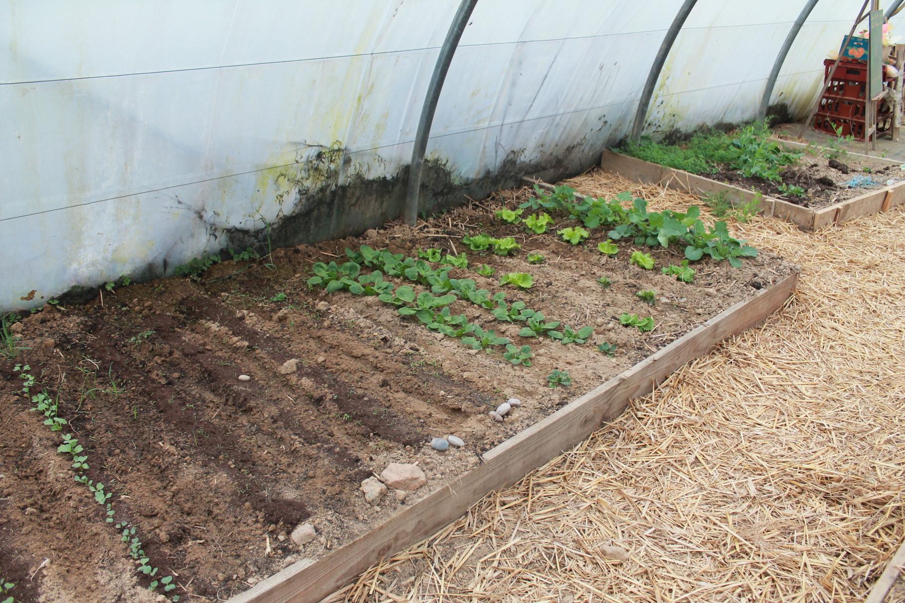 Des planches de légumes
