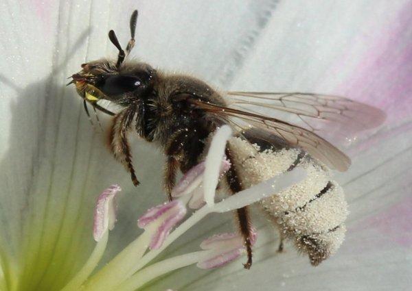 Photo © Françoise Vaselli / Galerie du Monde des insectes / www.galerie-insecte.org. CC BY-NC (2019)