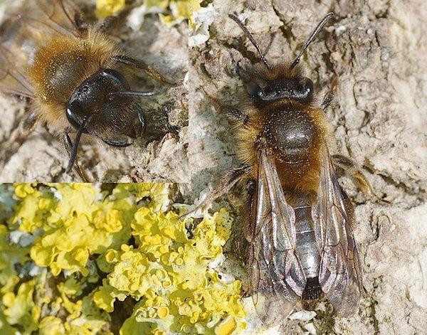 Photo © Michel Mathieu / Galerie du Monde des insectes / www.galerie-insecte.org. CC BY-NC (2019)
