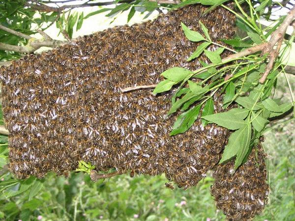 Photo © Franck / Galerie du Monde des insectes / www.galerie-insecte.org. CC BY-NC (2019)