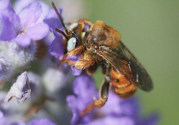 Photo © Marc Solari / Galerie du Monde des insectes / www.galerie-insecte.org. CC BY-NC (2019)