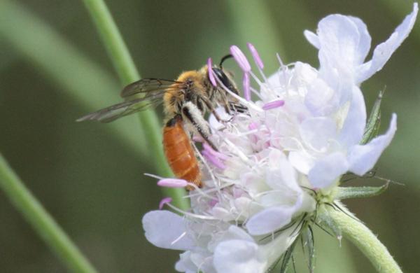 Photo © Philippe Petit / Galerie du Monde des insectes / www.galerie-insecte.org. CC BY-NC (2019)