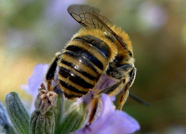 Photo © Phil / Galerie du Monde des insectes / www.galerie-insecte.org. CC BY-NC 4.0