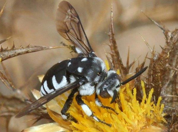 Photo © Pietro Niolu / Galerie du Monde des insectes / www.galerie-insecte.org. CC BY-NC (2019)