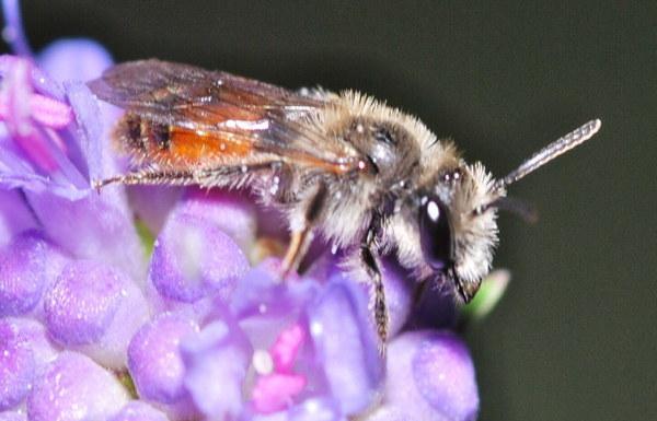 Photo © Eric Dufrene / Galerie du Monde des insectes / www.galerie-insecte.org. CC BY-NC (2019)