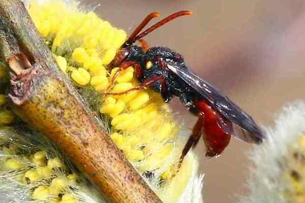 Photo © Patrick Straub / Galerie du Monde des insectes / www.galerie-insecte.org. CC BY-NC (2019)