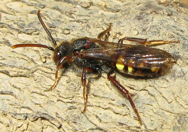 Photo © Christine DEVILLERS / Galerie du Monde des insectes / www.galerie-insecte.org. CC BY-NC (2019)