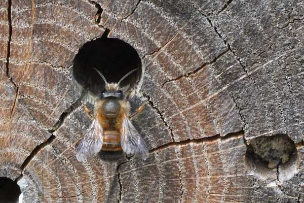 Photo © F. Pouilly / Galerie du Monde des insectes / www.galerie-insecte.org. CC BY-NC (2019)