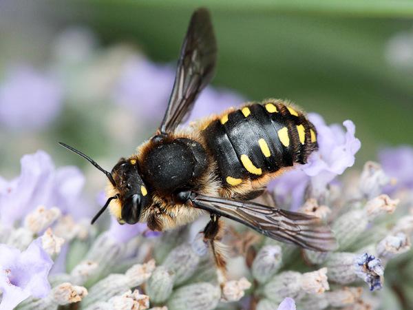 Photo © Michel Brisset / Galerie du Monde des insectes / www.galerie-insecte.org. CC BY-NC (2019)