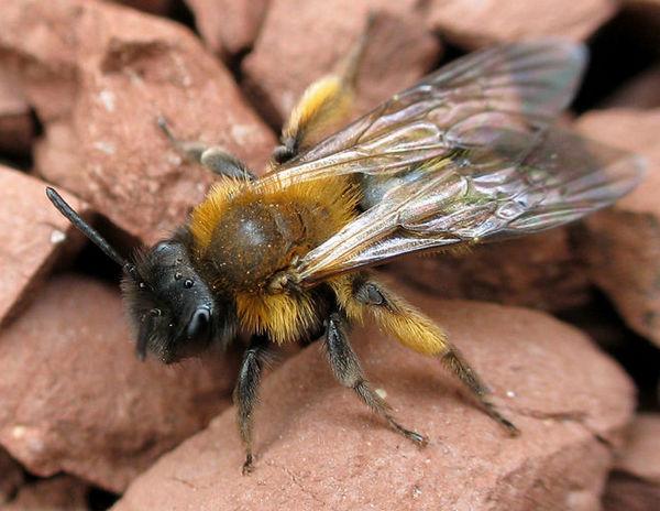 Photo © Anne Forgues / Galerie du Monde des insectes / www.galerie-insecte.org. CC BY-NC (2019)