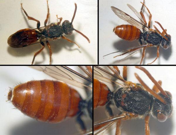 Photo © JC Malaval / Galerie du Monde des insectes / www.galerie-insecte.org. CC BY-NC (2019)
