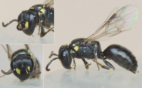 Photo © Pierre Gros / Galerie du Monde des insectes / www.galerie-insecte.org. CC BY-NC (2019)