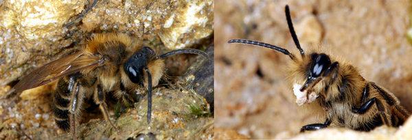 Photo © Liboupat / Galerie du Monde des insectes / www.galerie-insecte.org. CC BY-NC (2019)