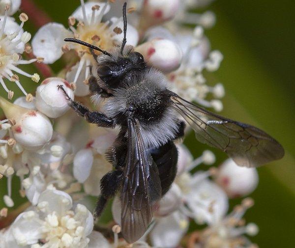 Photo © Lguez / Galerie du Monde des insectes / www.galerie-insecte.org. CC BY-NC (2019)