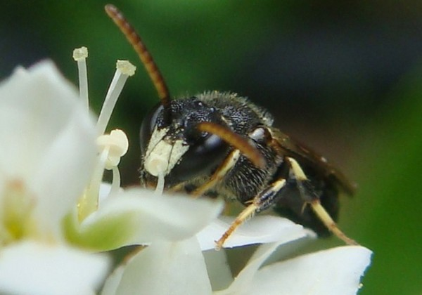 Photo © RUILLAT Christian / Galerie du Monde des insectes / www.galerie-insecte.org. CC BY-NC 4.0