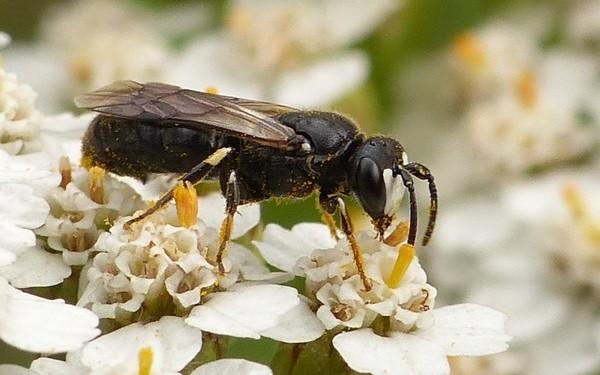 Photo © Jean-Pierre Viallard / Galerie du Monde des insectes / www.galerie-insecte.org. CC BY-NC (2019)